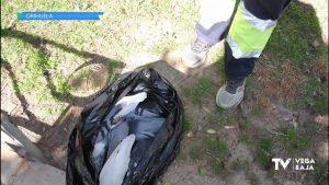 Una veintena de palomas aparecen muertas en Orihuela e investigan un posible envenenamiento