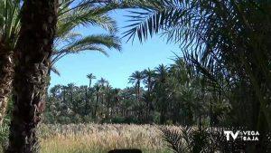 Los alumnos de 5º de Primaria de Orihuela plantarán su propia palmera