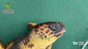 Rescatan una tortuga en peligro de extinción a 30 millas de la costa de Pilar de la Horadada