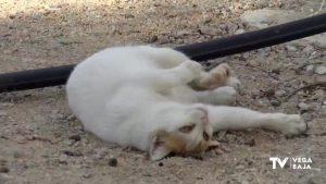 Balance positivo del servicio de recogida de animales abandonados en San Fulgencio