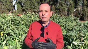Toda la información sobre la alcachofa, al alcance de los agricultores