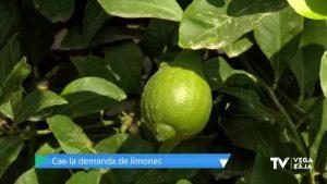 Agricultores desesperados: las restricciones en la hostelería afectan a la demanda de limones