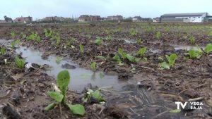 El campo celebra las lluvias que rompen la racha de más de 50 días de sequía