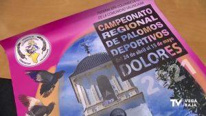 Dolores acogerá del 24 de abril al 15 de mayo el Campeonato Regional de Palomos Deportivos 2021
