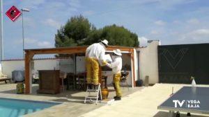 Los bomberos retiran una colmena ubicada en una terraza de una vivienda catralense