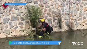 Los bomberos rescatan a un gato atrapado en unas ramas del río Segura