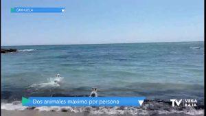 Orihuela Costa cumple una demanda histórica autorizando una playa canina en su litoral