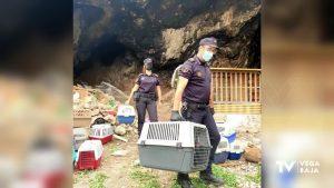 Encuentran una treintena de gallos de pelea en una cueva de la sierra de Orihuela