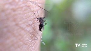 Los mosquitos hacen la vida imposible a los torrevejenses