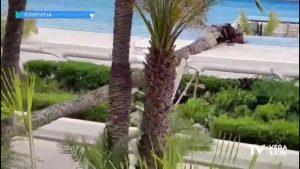 Las fuertes rachas de viento provocan la caída de una palmera sobre el paseo Vista Alegre