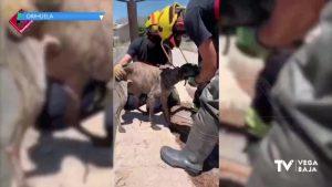 Los bomberos rescatan a un perro que había caído a una acequia de Orihuela