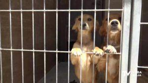 El PSOE de Orihuela denuncia que el Centro de Protección Animal funciona sin contrato