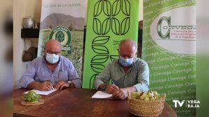 La Asociación de la Alcachofa se une a la Marca Territorio Vega Baja