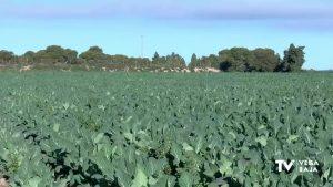 Pilar de la Horadada aconseja a sus agricultores qué hacer para proteger sus cosechas si llueve