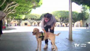 """Almoradí apuesta por el proyecto """"Avanza-dogs"""" para los adolescentes en situación de vulnerabilidad"""