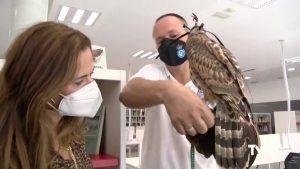La Biblioteca Municipal de Benejúzar estrena el «Rincón de las Aves y la Cetrería»
