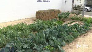 Seis nuevos huertos urbanos en el Ecomuseo de Almoradí se ponen a disposición de los vecinos