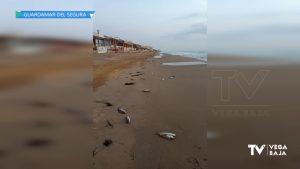 Los peces muertos en la desembocadura del río desatan la alarma por lo ocurrido en el Mar Menor