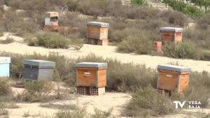 El sector apícola pide apoyo a la Generalitat y estudia convocar un nuevo calendario de protestas